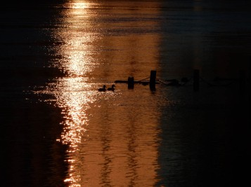 I like how the ducks appear to be stretching the sunlight over to the flooded dock.