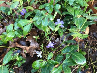 Ground cover is welcoming spring.
