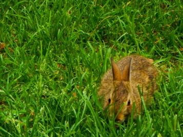 Not much taller than the grass he's eating.