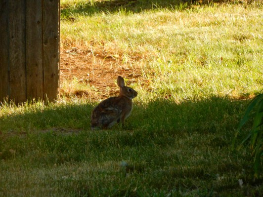 One of the bunnies we saw on our walk.