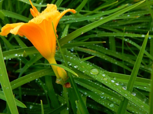 I was hoping the heavy rain last night would give me some close-up opportunities.