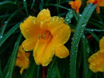 "We had almost 3""(7.62cm) of rain yesterday."