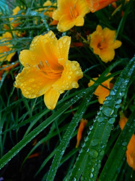 Heavy rains bring close-up opportunities.