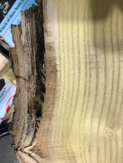 These gaps on the underside need to be filled to stabilize the bark.