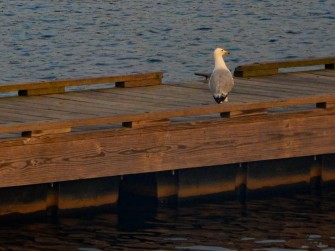 I think this guy has the right idea - sit and watch the sun rise.