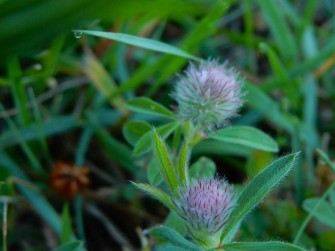 These tiny little weeds are fascinating.