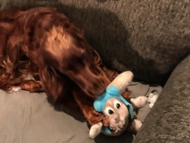 """Help me!"" - Maddie discovered an old toy. It doesn't look good for Rocky."