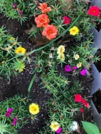 Home from our walk. These portulacas are on the other side of the stairs.