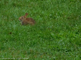 The Editor was scoping out the newest bunny in our yard.