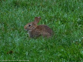 This is one little bunny