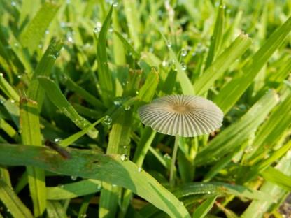 Mushroom or drink parasol?