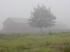 After the heavy rains, we have fog.