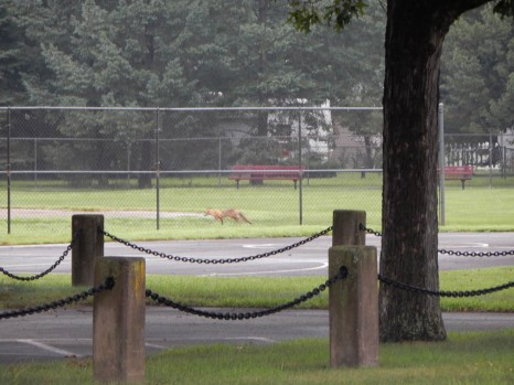 This fox is moving very fast.