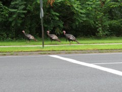 Manny, Moe and Jack? Not exactly Pep Boys here. These guys were doing a slow waddle.