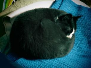MiMi likes to sleep on her blue blanket.