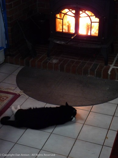 MuMu enjoyed the near-constant fire in the wood stove.