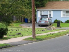 Birds have been arriving in large flocks lately.