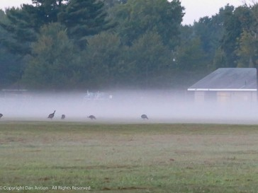 About 2 miles from Great River Park is a school. Off to a foggy start.