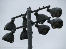 These guys must feel pretty little given the birds on the other lights.