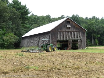 The tobacco is in the barn