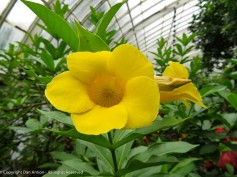 Sorry I don't know the names. Pretty yellow flower.