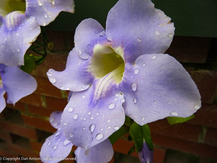 I love seeing water drops on flowers. This flower is a color I don't see well, but I know it's pretty.