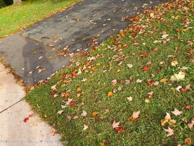 Leaves are starting to fall.