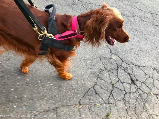 Maddie loves walking through the park.