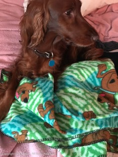 Maddie is trying to sleep. that's the Scooby Doo blanket I rescued from my mother's Goodwill bin.