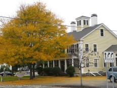 The Oral Surgeons - The building is obscured by the tree, but it's lovely this time of year.