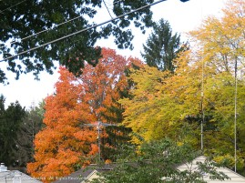Fall is popping out in places - not many, but some.