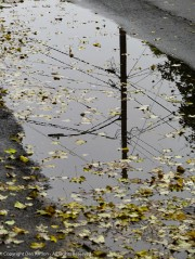 Even though it isn't clear, I still like the reflections in the puddle.