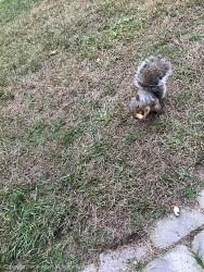 Rusty has his peanut.