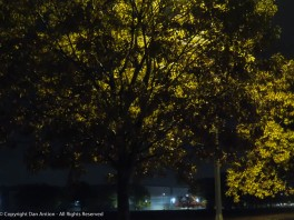 I pass these trees on my way to work. They are backlit by a series of street lights.