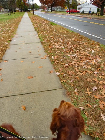 """""""Maddie - no one is following us!"""" Ghost sighting."""