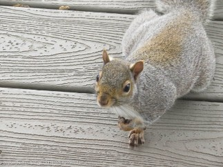 """""""Since you're here, do you have any peanuts?"""""""