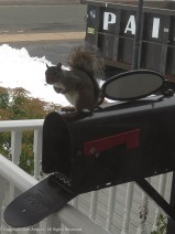 """I don't know how the mailbox got opened. Sorry for the noise. Did you bring peanuts?"""