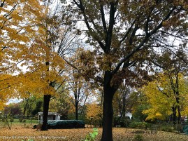 Neighbor's trees