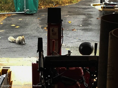I started the day on Saturday, reassembling the storm cab and drift slicer on my snow blower. I had a visitor.