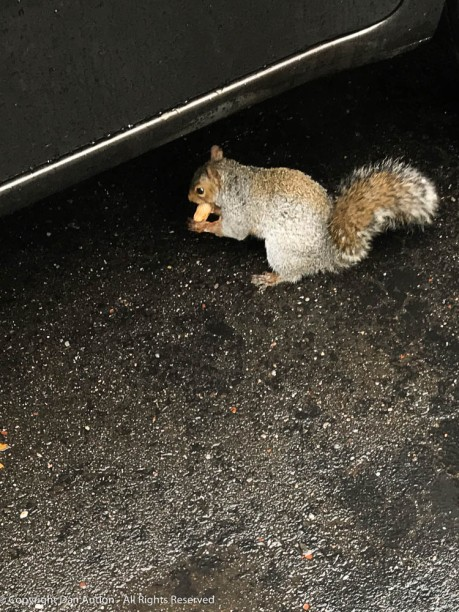 He retreated to the dry safety under The Editor's car,