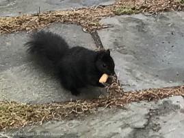 Smokey is about to enjoy a peanut.