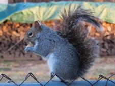 Happy squirrel!