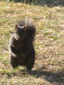 Smokey is romping his way over for a peanut.