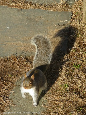 """""""Wow, that sun is bright. It's hard to see if you have any peanuts."""""""