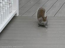 """Hi. do you have any peanuts today?"""
