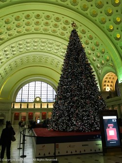 Christmas tree at Washington, DC's Union Station