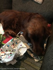 Maddie shreds the wrapping paper.