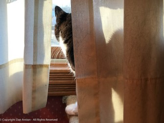 MiMi likes to look out and she loves to bake in the sunshine.