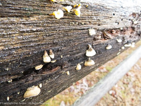 Frosty fence and fungus