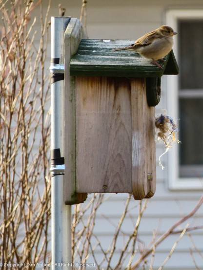 Looks like we have a guest for the winter. He's been working on the birdhouse for a couple days.